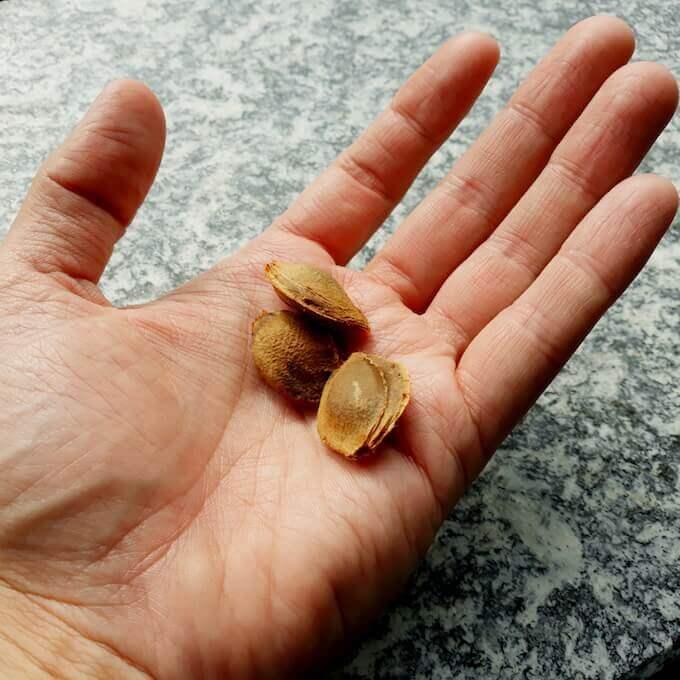 Noccioli di albicocche